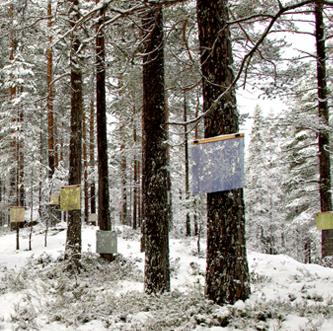 Å samtale med trær, Jondalen;